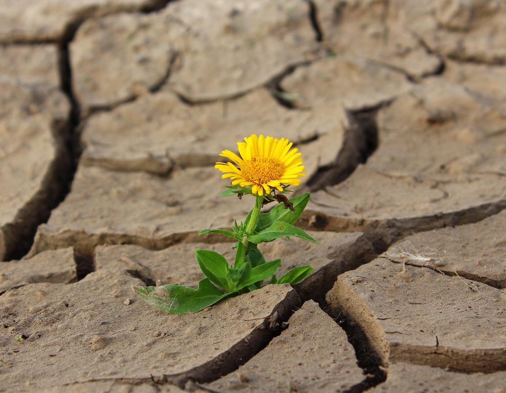 Flower in Mud Crack