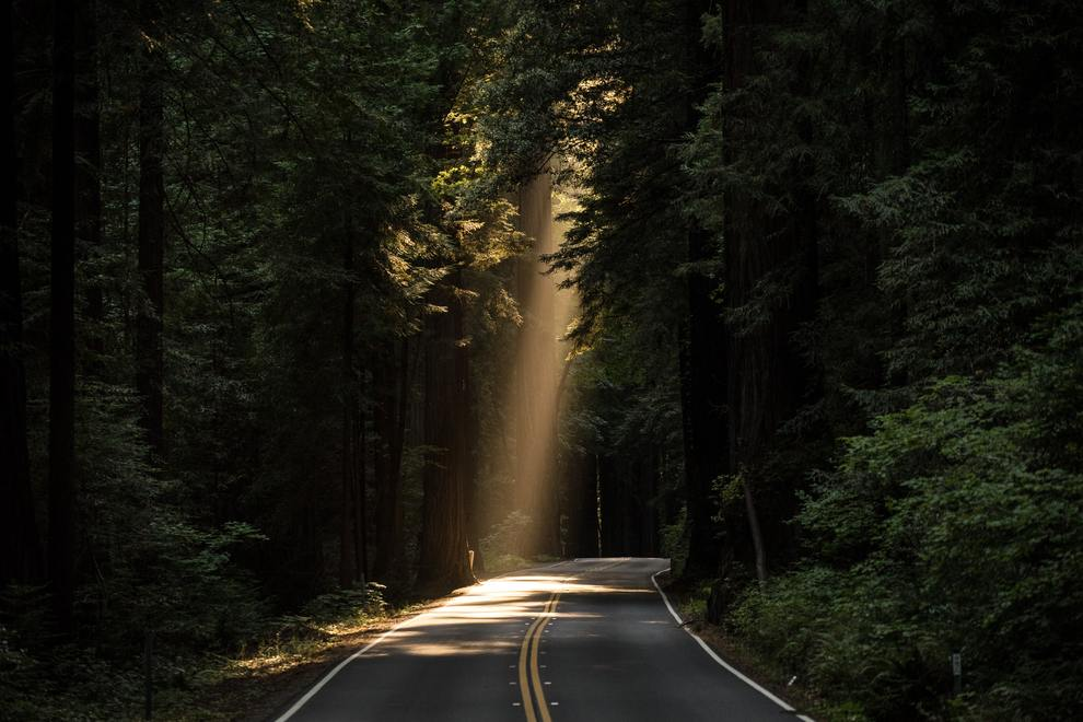 Sunlit patch of road in woods