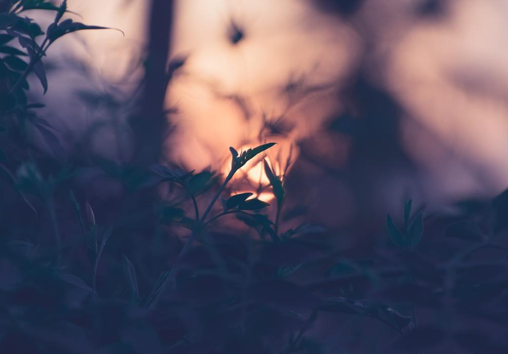 leaves forest backlit